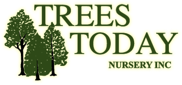 Trees Today Nursery