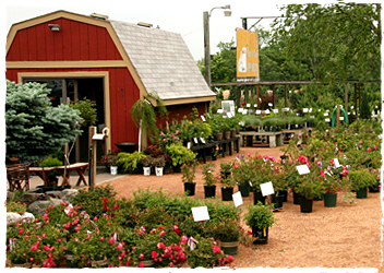 plant-yard