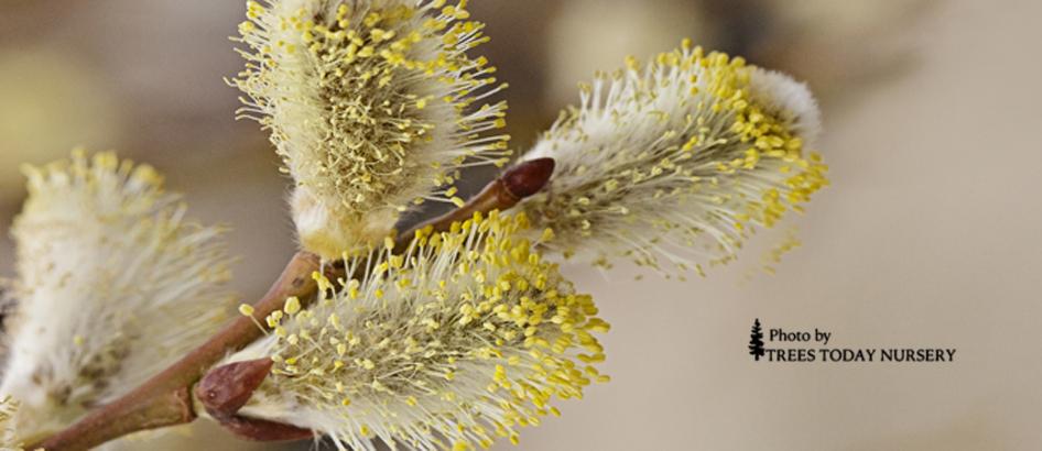 willow slider