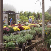 A foggy fall day at the garden center