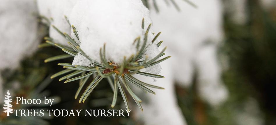 Evergreen winter slider