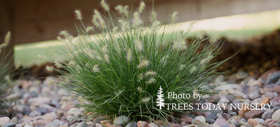 Bunny Tails Grass Slider