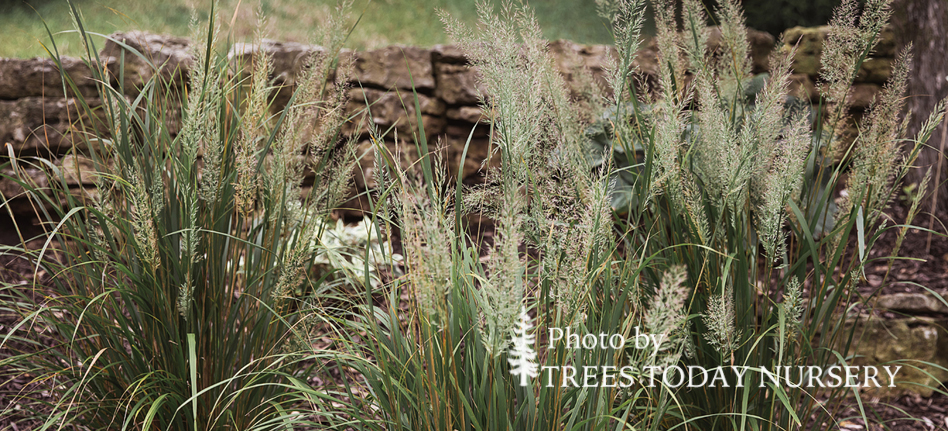 Fall Blooming Grass Slider